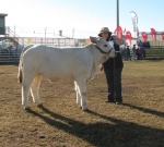 Wyoming Gypsy - Calf Champion Female - Beef 2012