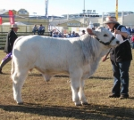 Wyoming Garrison - Calf Champion Bull - Beef 2012