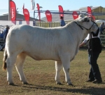 Wyoming Firefly - Reserve Junior Champion Female - Beef 2012