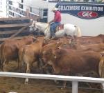 Beef Australia 2009 - 3rd Placed Steers