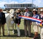 Grand Champion Romagnola Exhibit EKKA 2014 Wyoming Firefly - Photo Courtesy of QCL