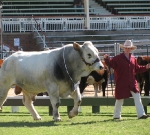 Wyoming Doctor Nelson - Grand Champion Bull Ekka 2010